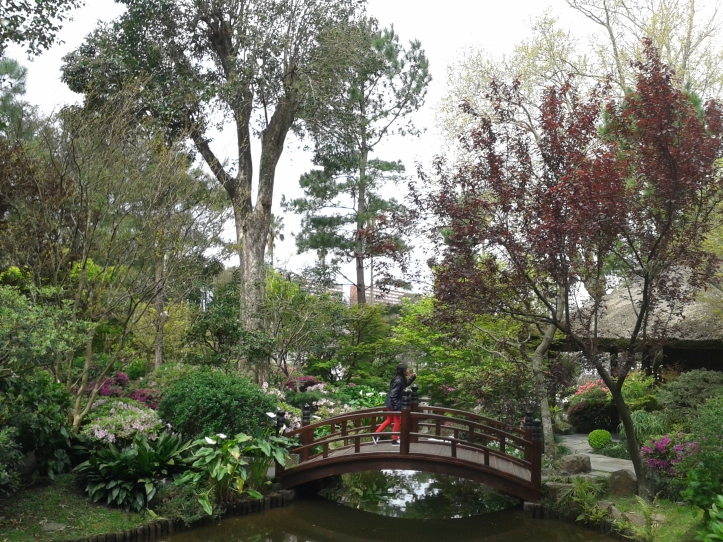 Lindo visual da ponte do Jardim Japonês
