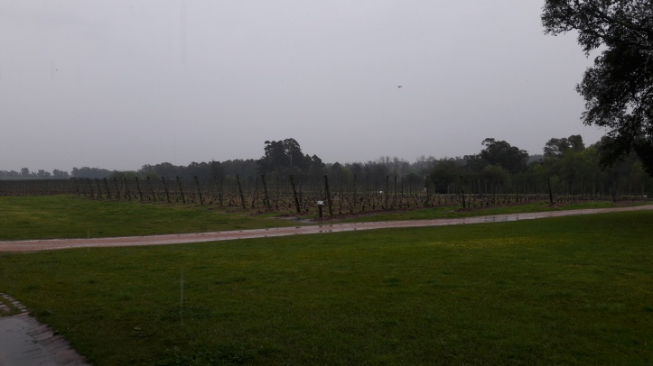 Parte da plantação de uvas da Bodega Bouza
