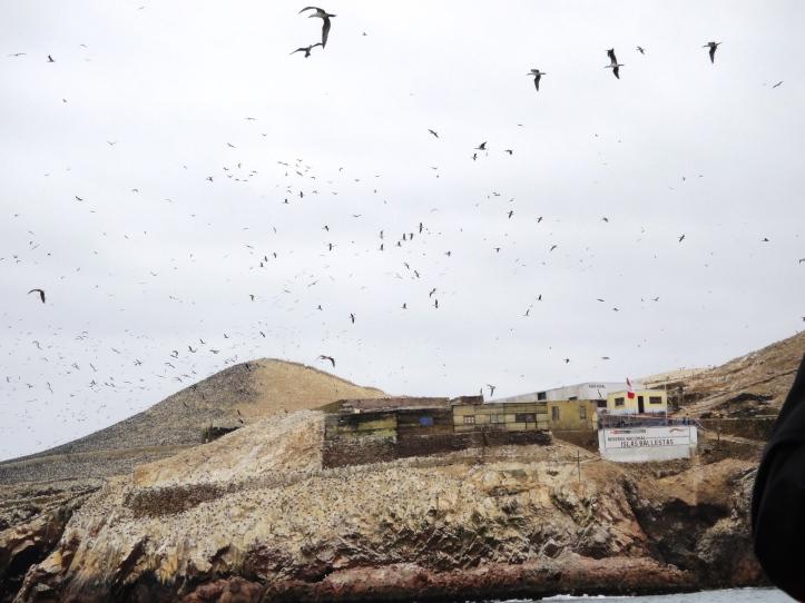 Pássaros sobrevoando uma das ilhas