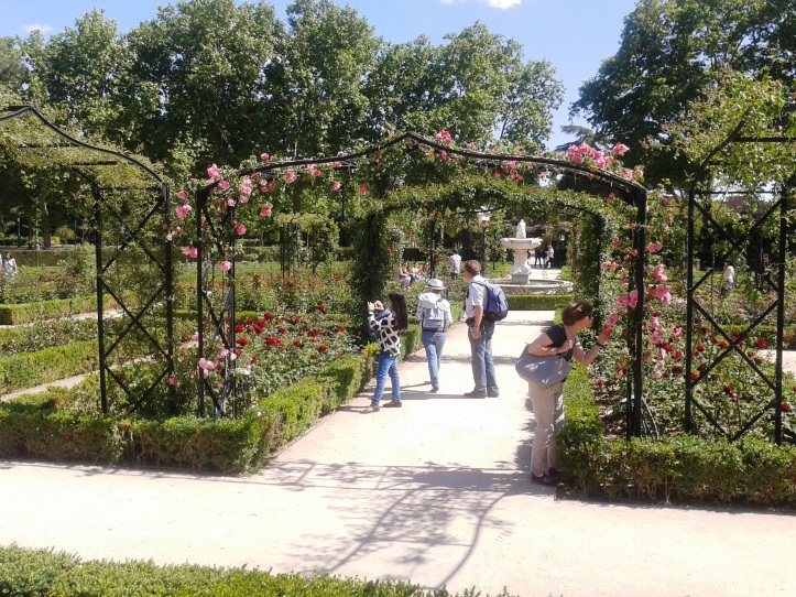 Plantação de rosas no Parque do Retiro