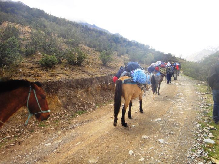 Cavalos com as bagagens