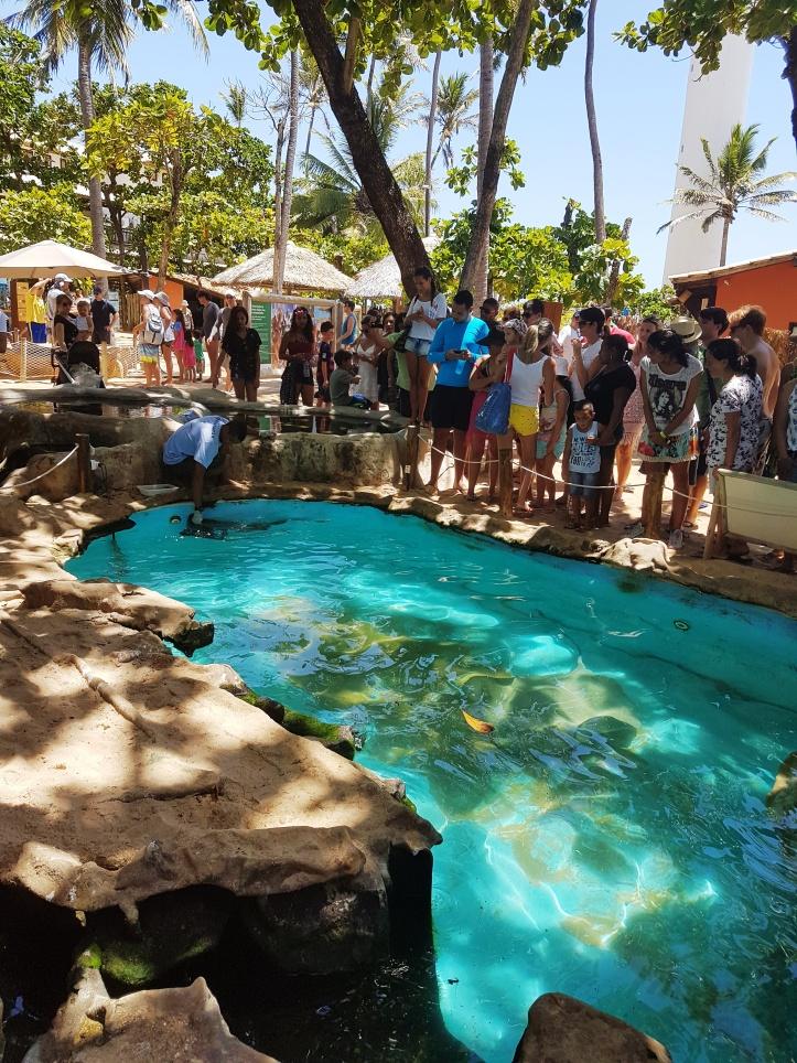 Alimentação de arraias e tubarões