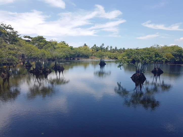 Parque Municipal Klaus Peters - lagoa