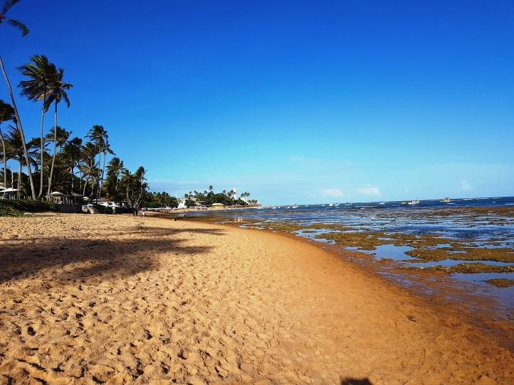 Coqueiral na Praia do Portinho